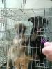 מבצע אימוץ כלבים בבתי ספר